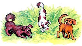 прохожие и собаки картинки вырастить ребенка совершенным